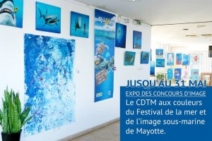 Le Festival de l'image sous-marine s'intéresse aux requins