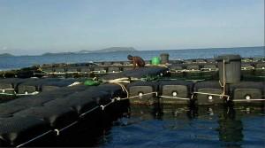 Aquaculture : rencontre avec Marc Trousselier, Directeur de recherche du CNRS