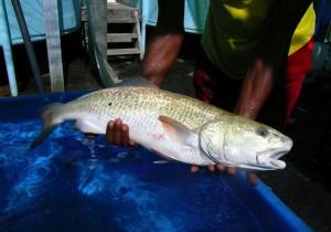 Construire une filière aquacole vertueuse pour Mayotte