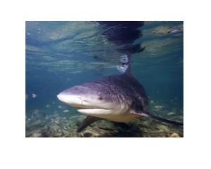 La DAAF contre l'interdition Requin