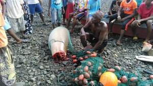 3 mois ferme pour le pêcheur du dugong