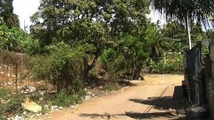 Des chiens abattus à Kawéni