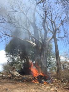 Insouciance : Feu de broussaille au pied d'un baobab de plusieurs dizaines d'années