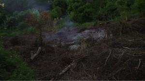 La culture sur brûlis : un fléau pour l'environnement (vidéo)