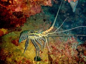 Interdiction de pêche et de commercialisation des crustacés