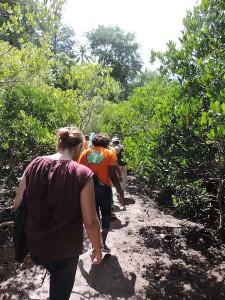 Balade dans la mangrove de Mamoudzou