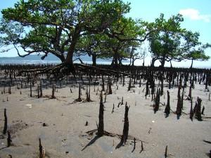 «A la découverte de nos mangroves», une exposition au Comité du Tourisme