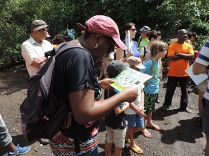 Mangrove de Mamoudzou-Identification des paletuviers