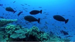 Le projet d'inscription du lagon au patrimoine mondial de l'Unesco sur les rails