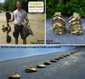 Des dizaines de tortues braconnées sur les plages de Bouéni et Charifou