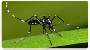 Un cas de Zika importé à la Réunion