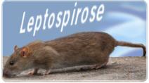leptospirose