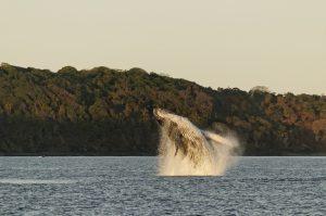 La saison des baleines est lancée !