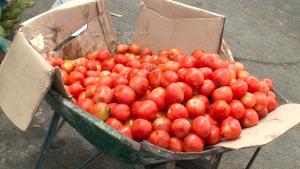 Un taux de diméthoate dans les tomates 2700 fois supérieur à la dose autorisée