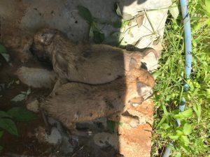 Cadavre chiens