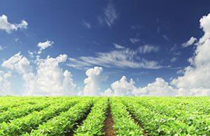 Lancement de la campagne exploratoire nationale de mesure des résidus de pesticides dans l'air à Mayotte
