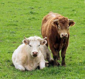 Lancement de campagne 2018 pour l'aide  de « minimis bovins »