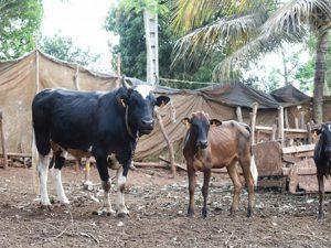 La FVR c'est fini à Mayotte
