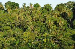 Environnement : les îles de l'Océan Indien confrontées aux conséquences du réchauffement climatique