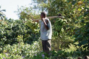 Vols de bétails et de plantations, rien ne va plus chez les agriculteurs mahorais