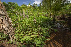 Journée mondiale des zones humides : en 2020 zones humides et biodiversité