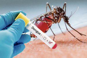 1 797 cas de dengue confirmés