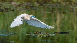 Reconnaître le chant des oiseaux depuis chez soi