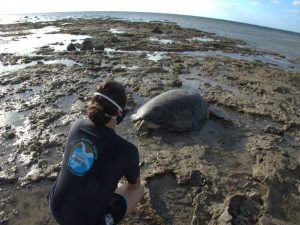 Protection des tortues : le REMMAT protège, réserve et sauve