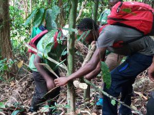Un nouveau projet va permettre de défricher les espèces envahissantes de la forêt de Bénara