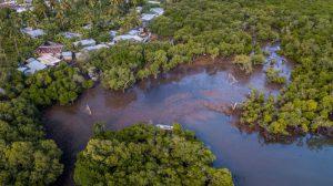Un nouvel outil pour visiter les mangroves virtuellement