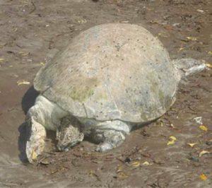 Les Naturalistes de Mayotte lancent le projet Life4Best pour protéger les tortues