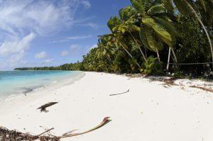 Une catastrophe écologique est en cours à l'île Maurice