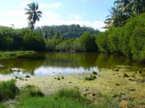 GEPOMAY s'associe avec l'association Jardin de Mtsangamouji pour préserver la lagune d'Hambato