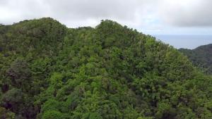 Les Naturalistes de Mayotte s'invitent dans le débat sur la crise de l'eau