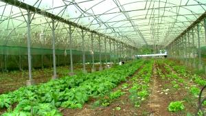 Quelles seront les orientations stratégiques pour le développement de l'agriculture ?