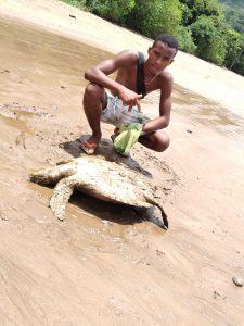 Une tortue échouée sauvée par un agent du Conseil départemental