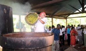 Vers une réglementation de la filière des cosmétiques à Mayotte ?