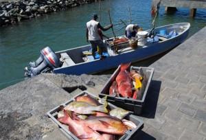 Une halle des pêcheurs à Mtsahara