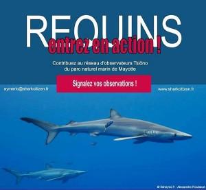 Les requins à l'étude à Mayotte