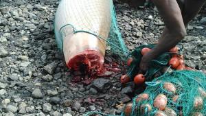 Braconnage de dugong à Kani-Bé
