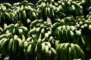 Vol d'un régime de bananes