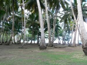 Bandrélé : Interdiction de construction illégale de bangas sur les sites touristiques