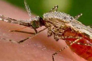 Pendant la saison des pluies, luttons contre les moustiques !