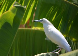 Tourisme Mayotte dresse la liste des oiseaux vivants à Mayotte