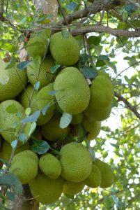 Un livre en 3 tomes pour découvrir les fruits et légumes de Mayotte