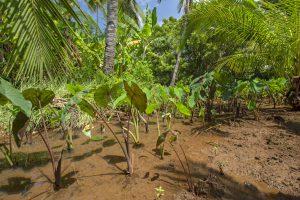 La lagune d'Ambato, une zone emblématique de l'écosystème de Mayotte