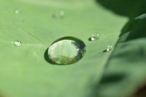 La Préfecture commence à parler de restrictions des usages en eau