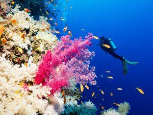 Le Festival de l'Image Sous-Marine de Mayotte aura bien lieu !