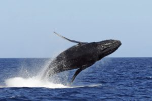 Les conséquences de la marée noire se font t-elles ressentir sur les animaux marins de Mayotte ?