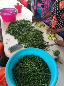 Les marchés paysans auront lieu à Coconi en septembre